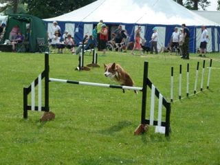 Dog agility at Hutton-in-the-Forest